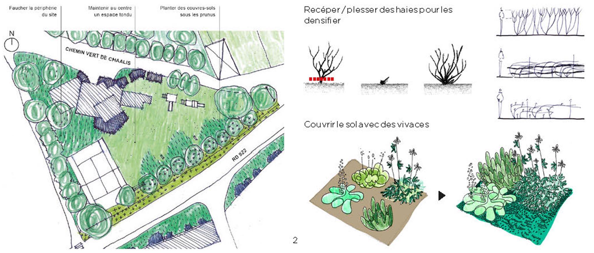 Omnibus | Fleurissement durable, de la théorie à l'action